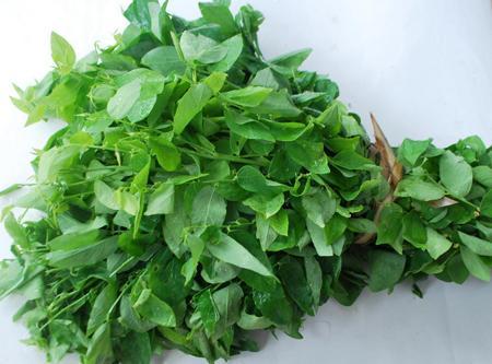 Trị nhiệt miệng siêu hiệu quả của 3 loại rau xanh