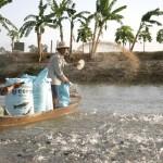 Một số loại hóa chất và phương pháp sử dụng hóa chất trong nuôi trồng thủy sản.