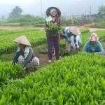 Giải pháp cho dược liệu Việt