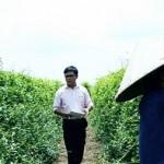 'Mở đường' chuẩn hóa nguyên liệu dược phẩm Việt
