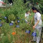 Đưa dược liệu trở thành thế mạnh của ngành dược Việt Nam