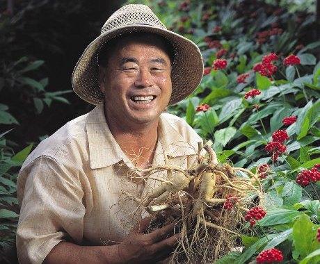 Giải mã kĩ thuật trồng nhân sâm  Hàn Quốc