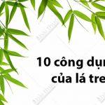 10 công dụng nên thử của lá tre