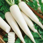 Bài thuốc chữa bệnh từ củ cải trắng