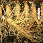 Chống lão hóa với các loại rau củ có thể bạn chưa biết