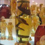 Một số bài thuốc rượu nấm linh chi