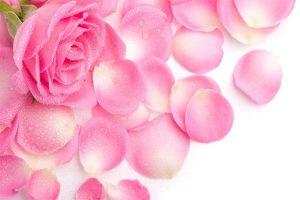Mách bạn 3 hỗn hợp tắm trắng toàn thân hiệu quả từ hoa hồng