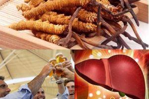 Tác dụng của đông trùng hạ thảo đối với gan