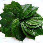 8 bài thuốc trị hôi nách từ nguyên liệu tự nhiên hiệu quả