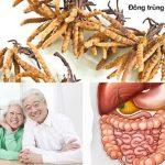 Nước đông trùng hạ thảo và tác dụng đối với người già
