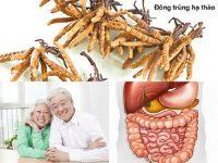Đông trùng hạ thảo tốt cho hệ tiêu hóa