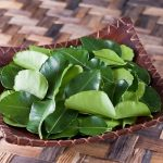Công dụng chữa bệnh từ lá chanh bạn đã biết chưa?