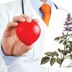 Các cây cỏ dược liệu chữa bệnh tim dễ tìm