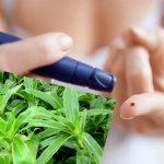Hiệu quả chữa bệnh tiểu đường của cây lược vàng
