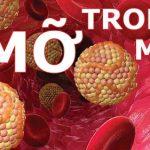 Bệnh mỡ máu cao – dấu hiệu nhận biết và phòng ngừa hiệu quả