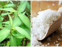 Điểm danh 2 công thức trị nám da với rau răm hiệu quả