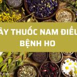 Top 10 cây thuốc Nam giúp điều trị bệnh ho cực hiệu quả